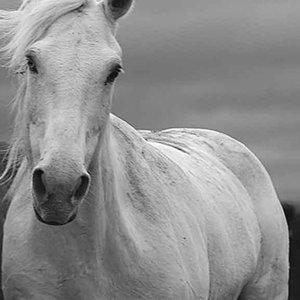 White Knight by Roberta McGowan