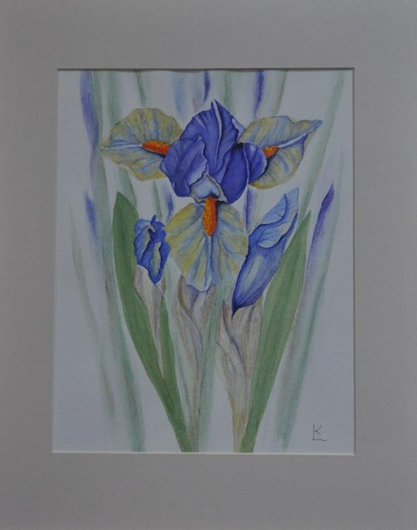 Bearded Iris - Image 0