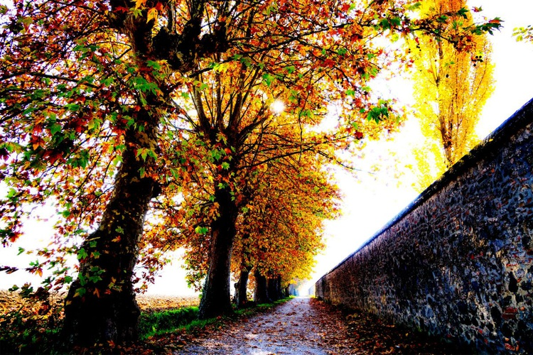 Autumn memories - Image 0