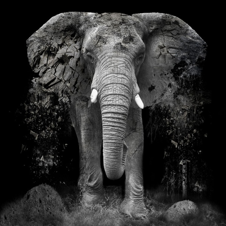 The Disappearance of the Elephant - Image 0