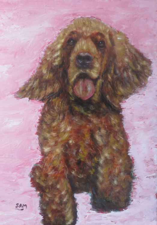 Brown Fluffy Dog on a pink background -