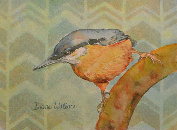 Red Breasted Nuthatch -