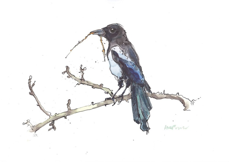 Nesting magpie - Daily Bird #14 - Image 0
