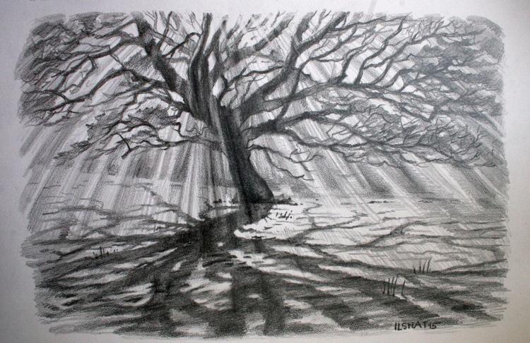 Tree . Drawing. - Image 0
