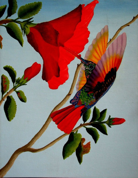 Beautiful Hummingbird - Image 0