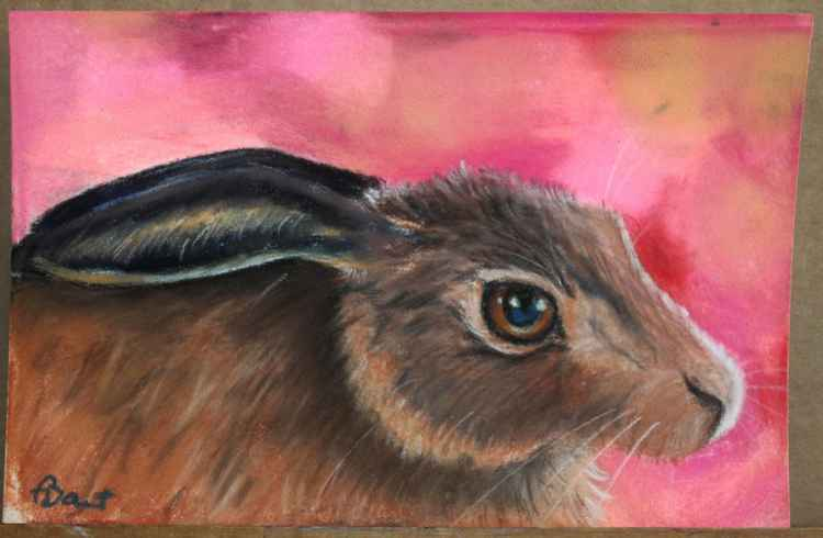 The Pink Hare, pastel postcard