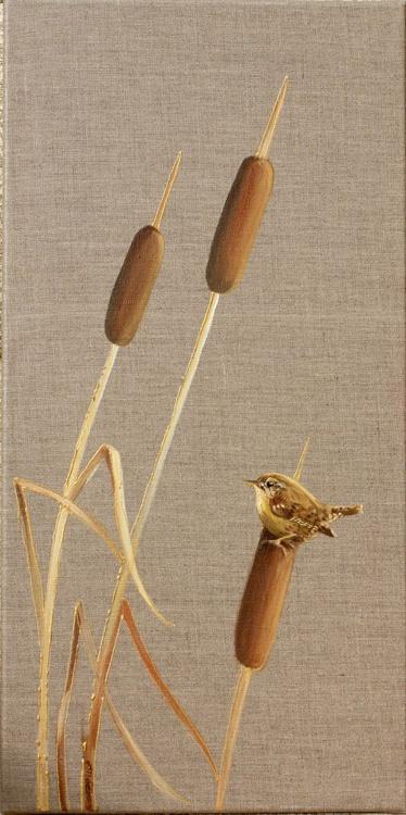 Marsh Wren on Bulrushes - Image 0