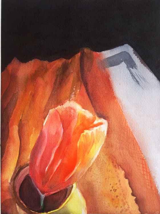 Orange Tulip -