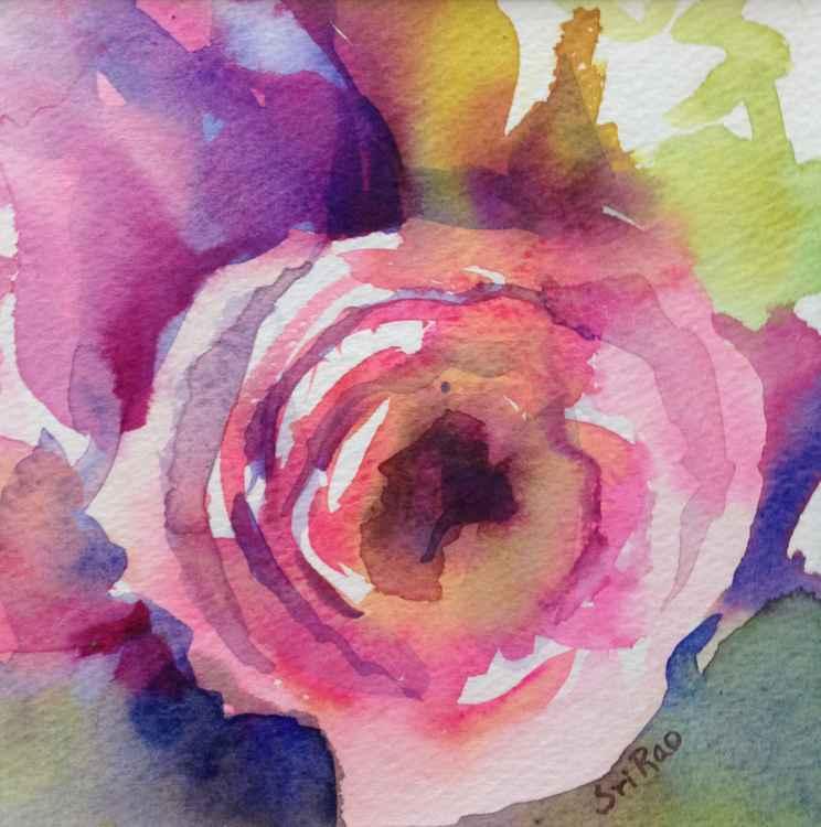 Pink Ranunculus -
