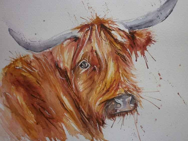 Highland cow!