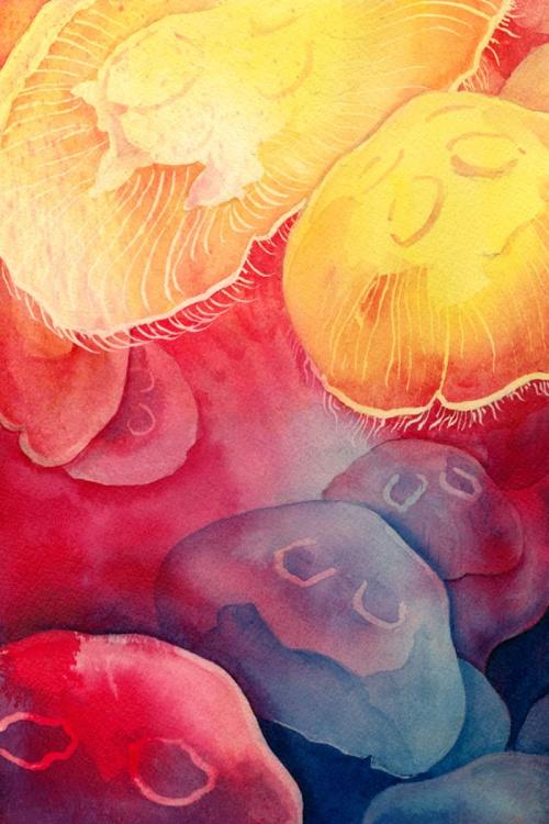 Moon Jellies - Image 0