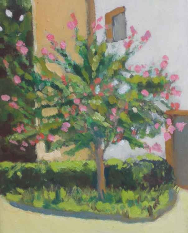 Courtyard Tree in Spring