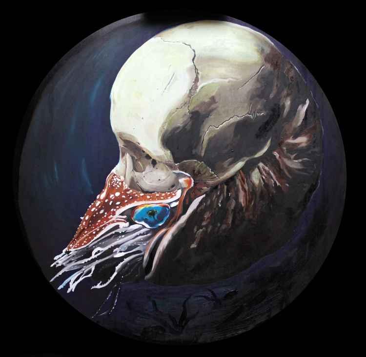 Skull Nautilus -