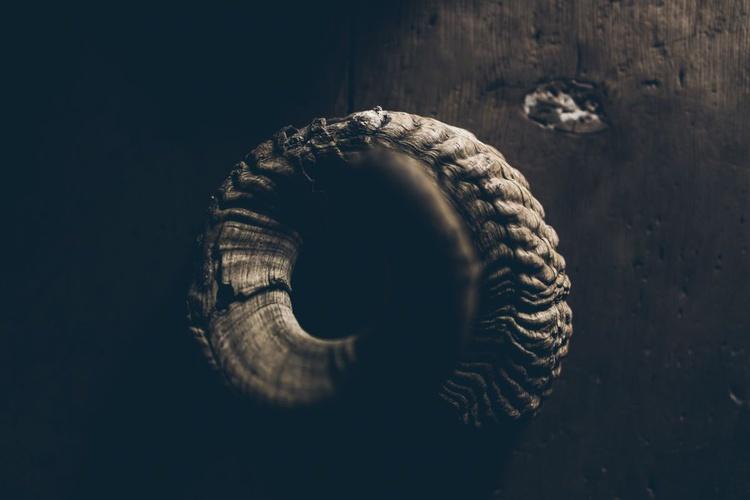 Horn - Image 0