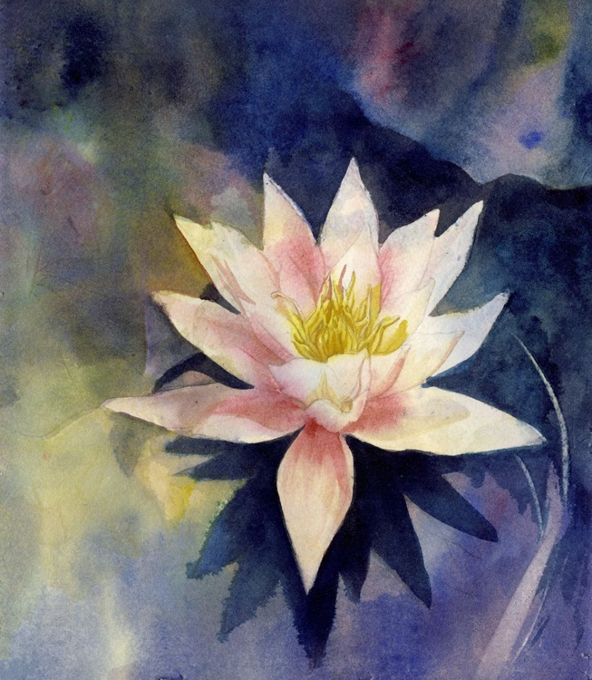 waterlily with blue - Image 0