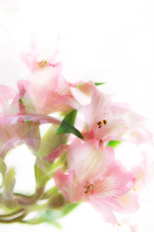 "Garden 6 ""Soft""  (from the Garden Series) - Image 0"