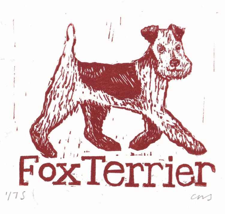 Fox Terrier -