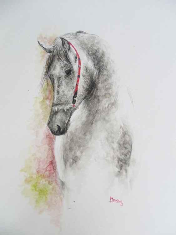 Arabian -