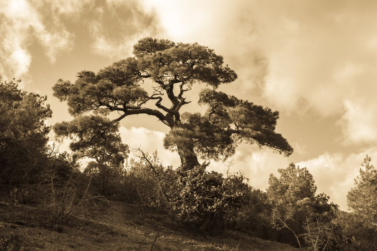 Southern tree. - Image 0