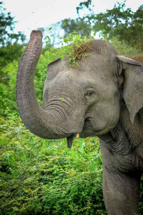 Elephant Having Fun -