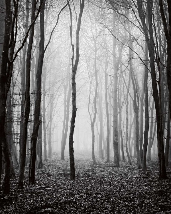 Dawn Trees - Image 0