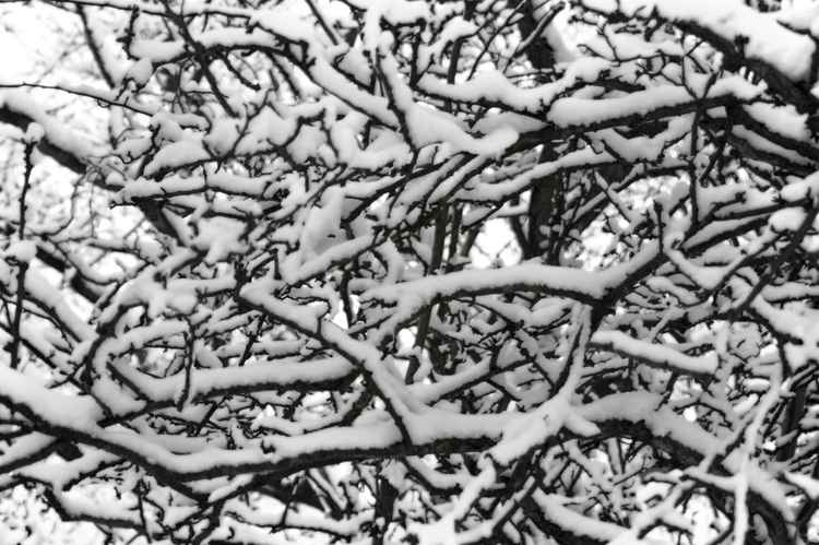 'SNOWY BRANCHES #2' -