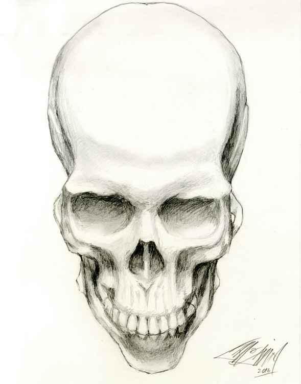 Skull Study One -
