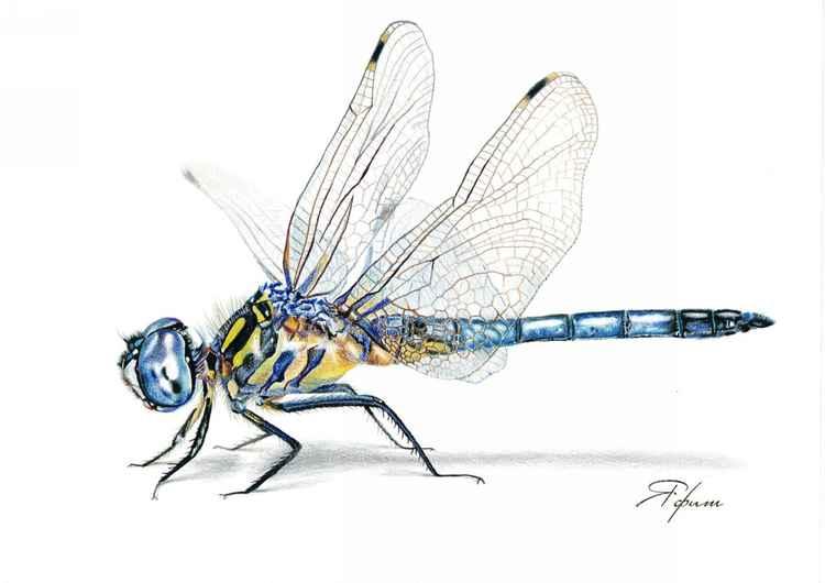 Blue Dragonfly -