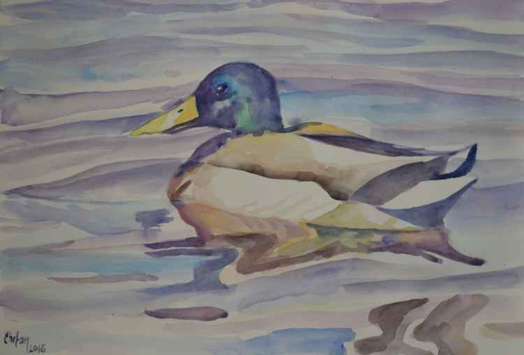 MALLARD DUCK ON THE WATER -