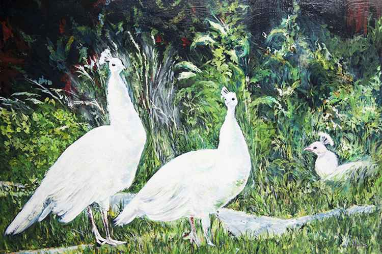 White Peacocks -
