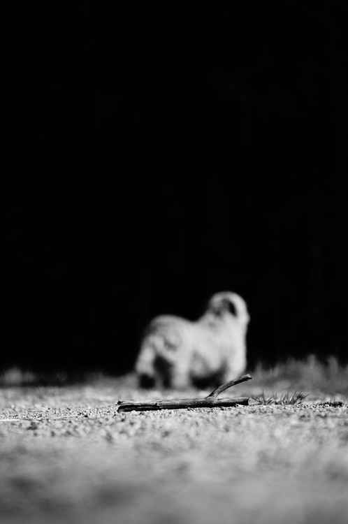 Abandoned stick -