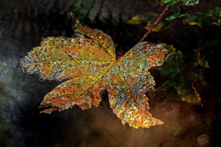 Colourful Death - Image 0