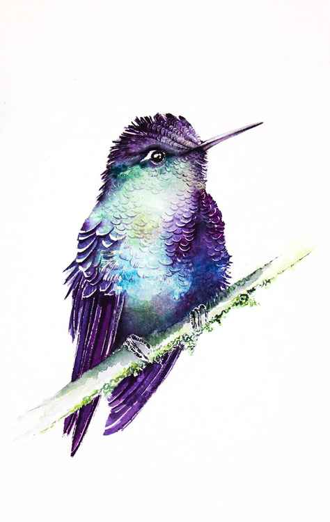 Hummingbird on branch -