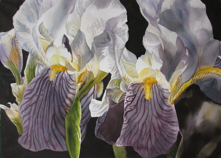 Memory  of the iris - Image 0