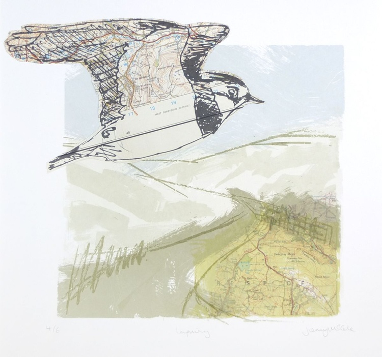 Lapwing in the landscape - Image 0