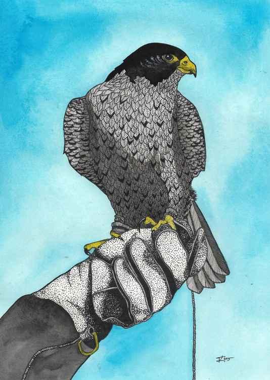 Falconry -