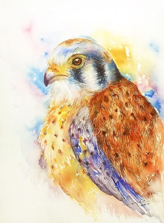 Sparrow Hawk - Image 0