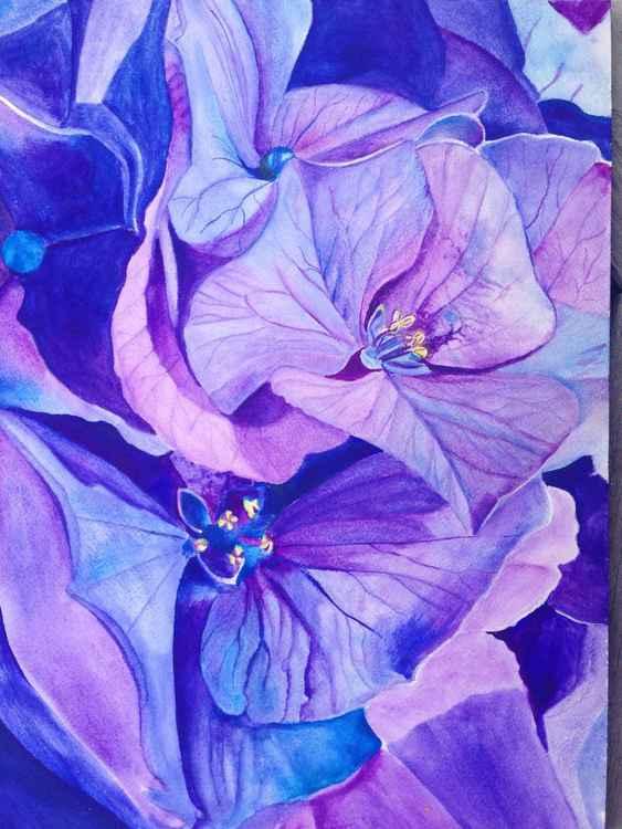 Hydrangea #1 -