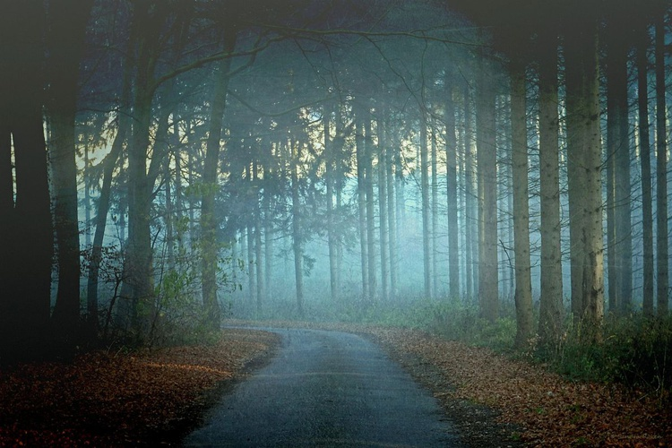 Walk in the Morning Fog - Canvas 75 x 50 cm - Image 0