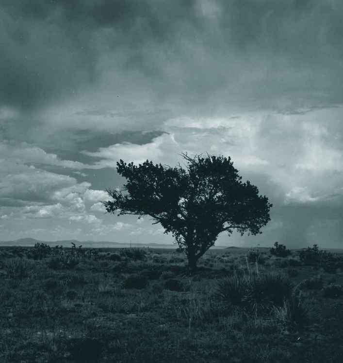 Tree New Mexico -