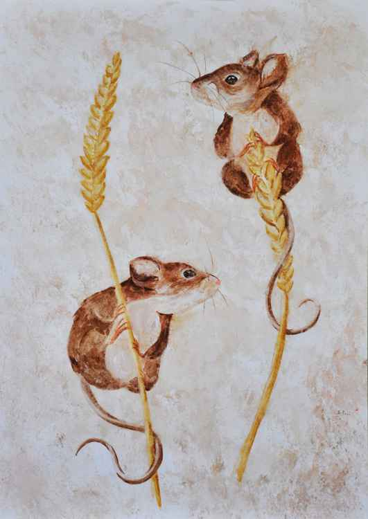 Mice Study 01 -