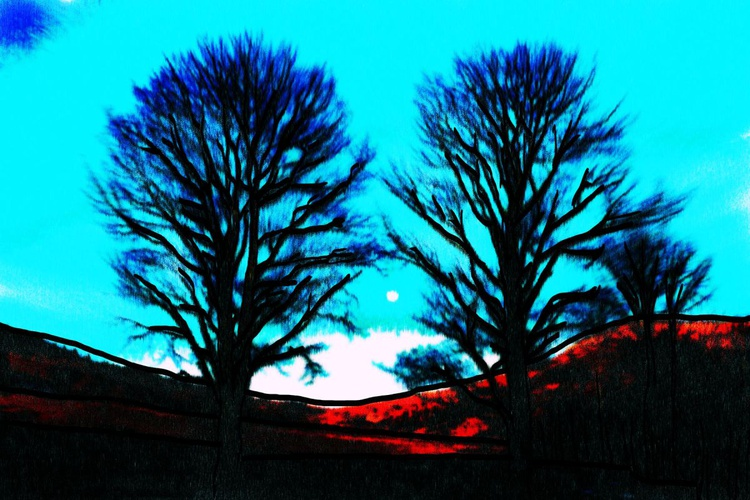 Trees and Moon - Premium Poster Print - 120 x 90 cm - FREE SHIPPING - Image 0