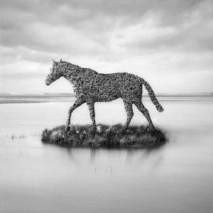 Horse Island by Dariusz Klimczak