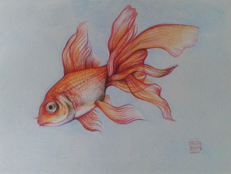 Goldfish in Coloured Pencil - Image 0