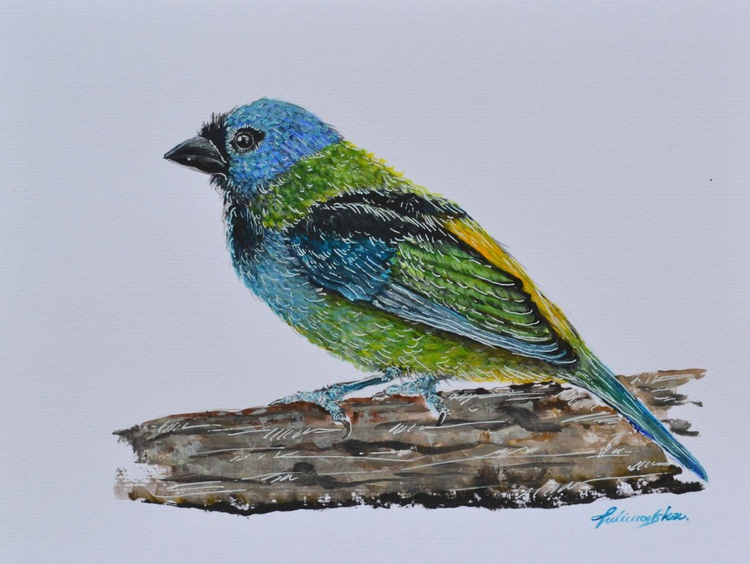 Green -headed tanager - Image 0