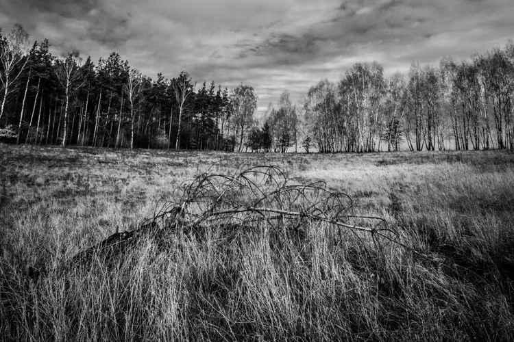 Landscape1 -
