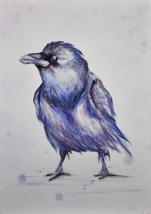 Raven Study 01 -