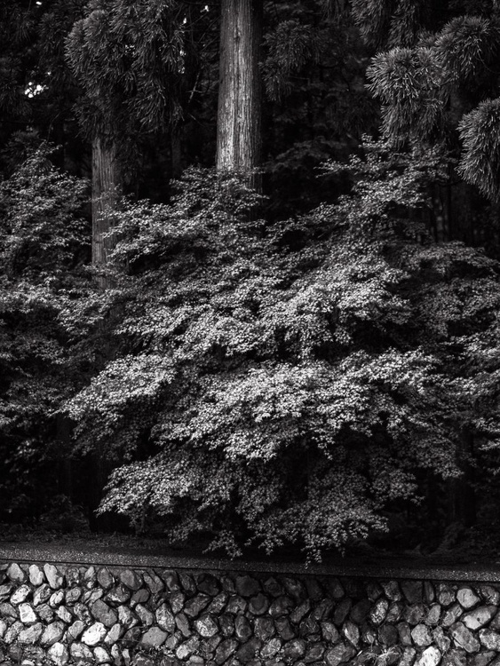 Temple garden detail II, from the Japan Notebook. - Image 0
