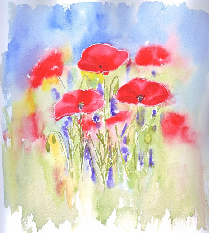 Poppies and Lavender in my Garden - Image 0