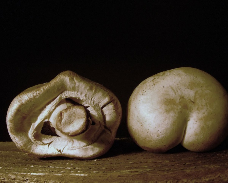 Mushrooms  *CAN BE SIZED TO DEMENSIONS REQUIRED - CONTACT ARTIST* - Image 0